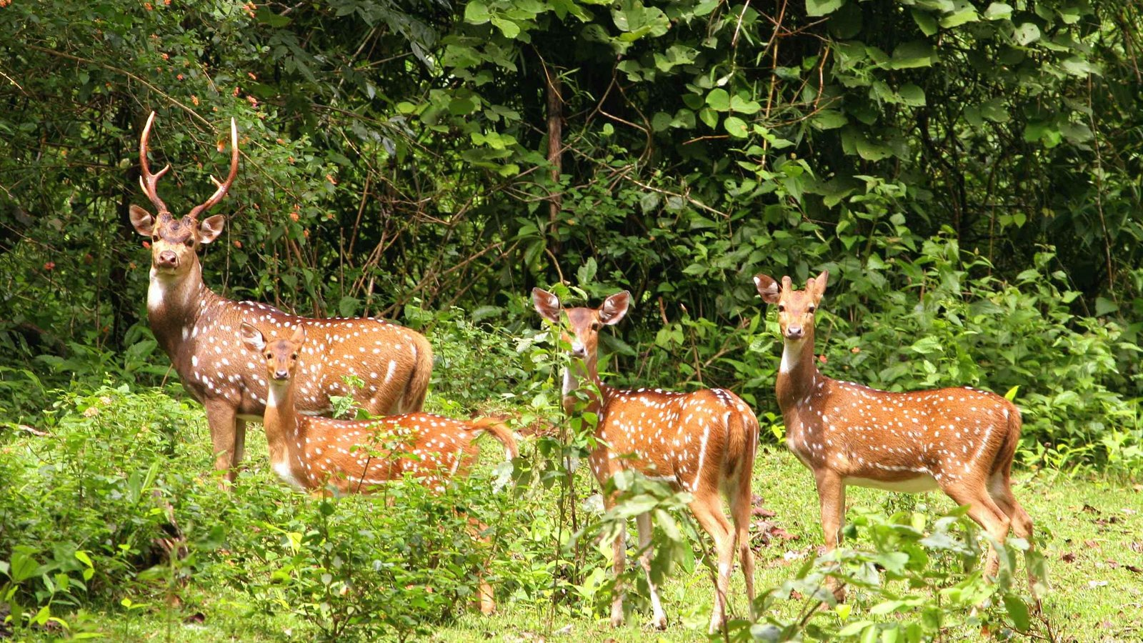 Kaziranga-National-Park-1