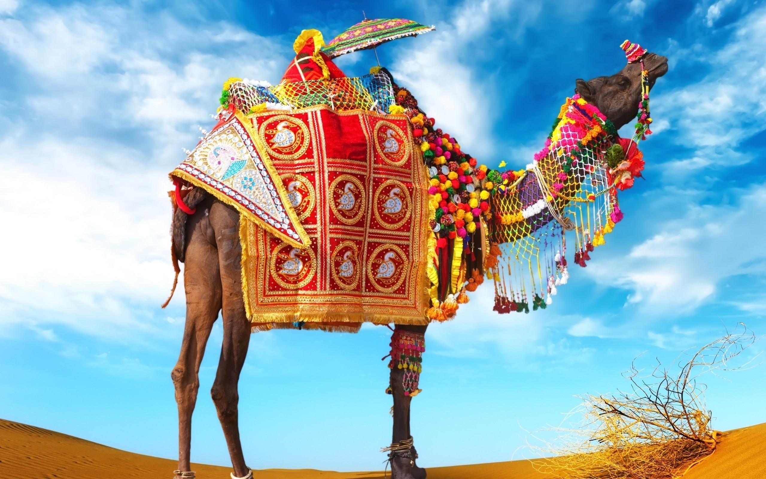 Decorative_Camel_in_Desert_HD_Photo thar d